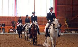 Тренинг лошадей, подготовка всадников