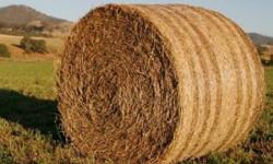 Технология кормов и кормление сельскохозяйственных животных