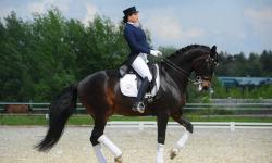 Физическая культура и конный спорт