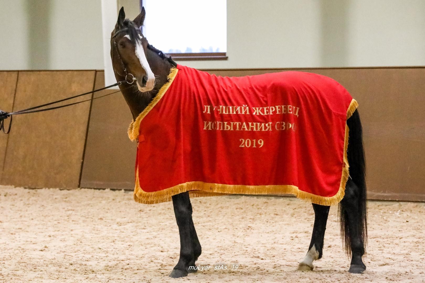 Кубок среди молодых лошадей по выездке
