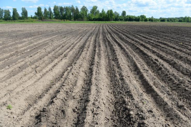 Прием заявок на получение земельных участков по программе «Ленинградский гектар»