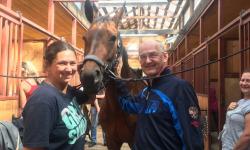 Ветеринарные аспекты работы спортивных лошадей. Массаж лошадей