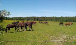 Массаж лошадей