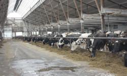 Применение компьютеров в управлении животноводством и селекционно-племенной работой «СЕЛЭКС»