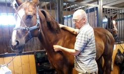 Семинар «Массаж лошадей» с доктором Н.А. Ягуповым