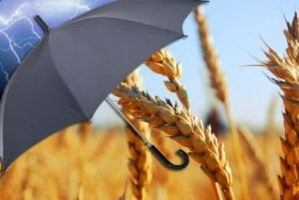 Маркетинг сельскохозяйственной продукции
