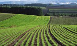 Перспектива развития земельной политики