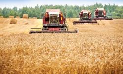 Стимулирование зерновой отрасли АПК