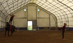 Обучение по программе: «Подготовка лошади и спортсмена в вольтижировке»