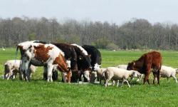 Российское животноводство приближается к европейским стандартам