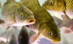 Рыбохозяйственный комплекс