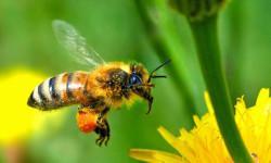 «Академия пчеловодства Северо-Западного региона» - новый образовательный проект для опытных и начинающих пчеловодов